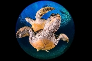 ../foto/ridottexsito/346_83_Planet Turtles.jpg